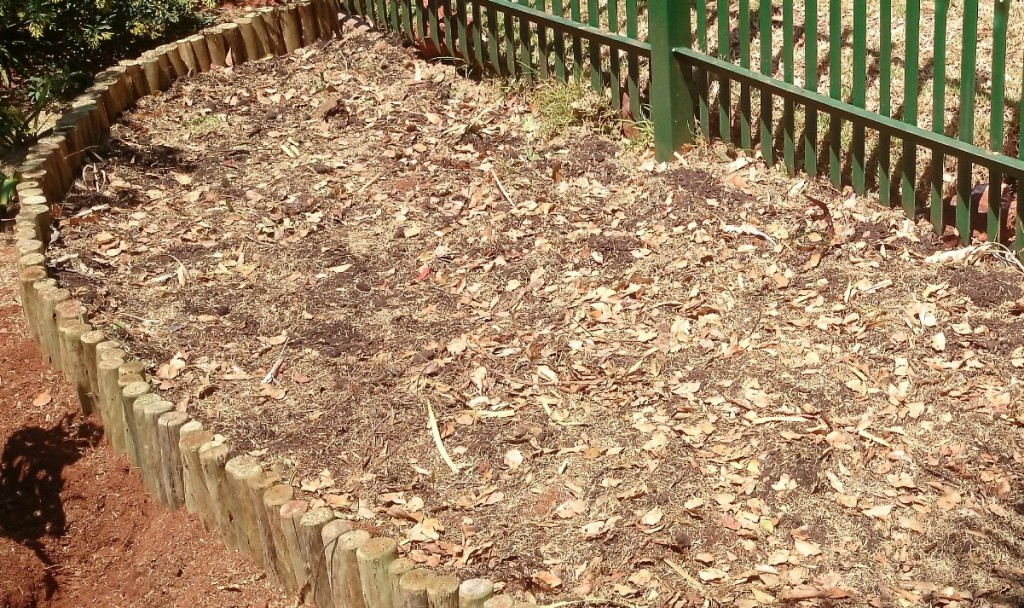 The raised bed, mulched with a lot of compost and leaves to enrich the soil and slow evaporation.