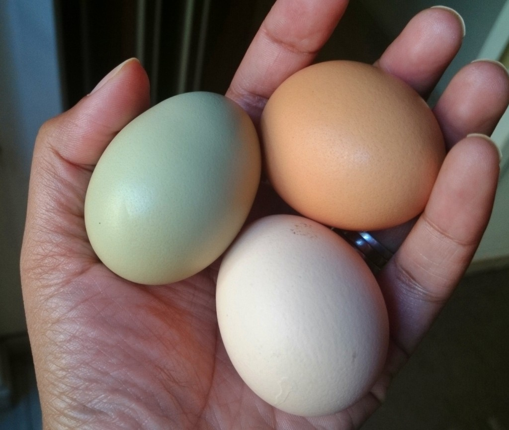 Fresh eggs from the chicken farm. I'm still hoping for Easter Egger or Araucana chickens that lay green and blue eggs respectively.