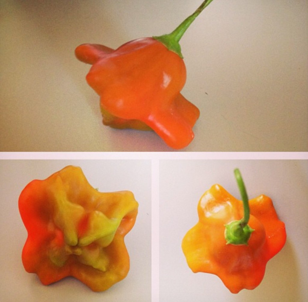 Bishops crown peppers