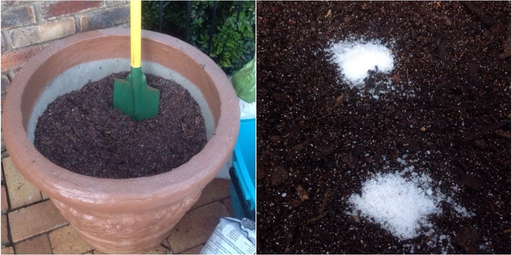 Soil mix in pot with spade