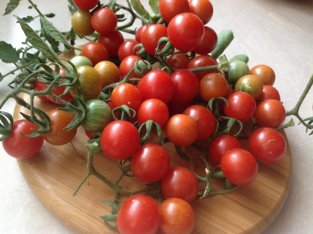 Volunteer Cherry tomatoes on wooden board