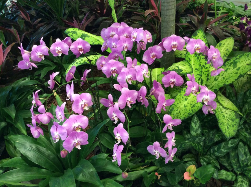 Singapore airport, light purple orchid therainqueen.com